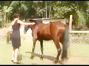 Bitch getting fucked by a horse Laura Horse Bitch 2 My Zoo Wife Bestiality Videos